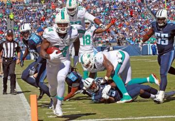 TD dolphins